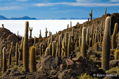 Fine-Art Print Of Cactus Figurines