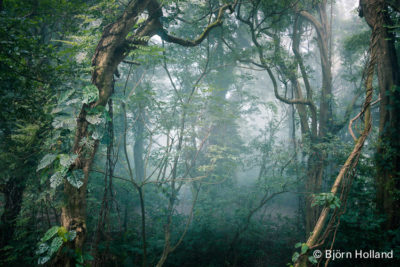 Fine-Art Print Of Cloud Forest